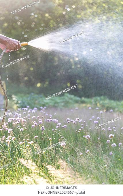 Grass, man watering garden on background