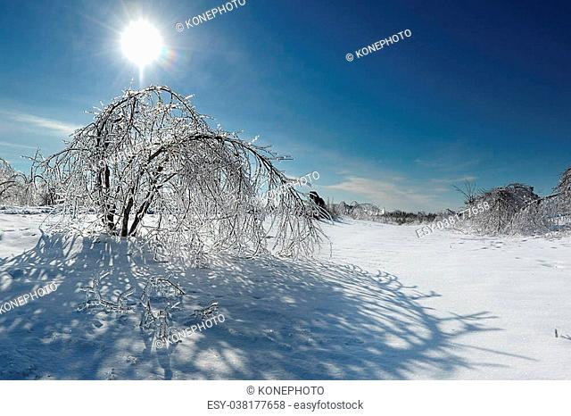 Tree covered in ice after a major winter storm