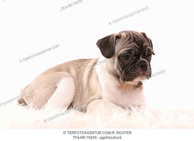 10 weeks old pup