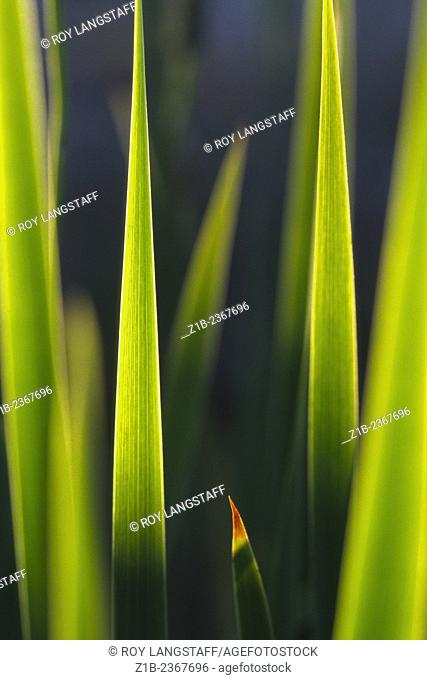 Macro image of the dried tip of a leaf