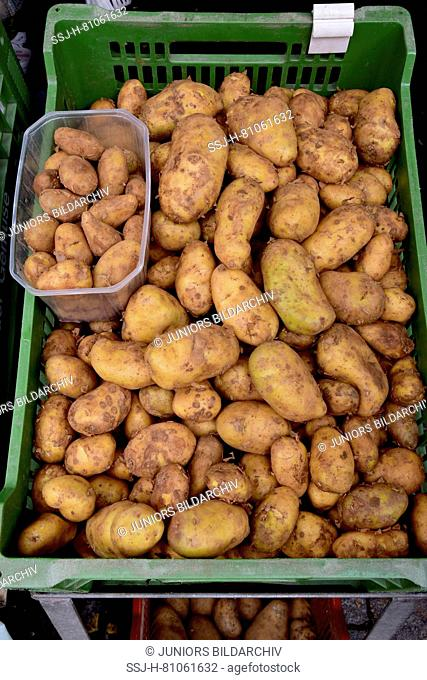 Market stall offering potatos