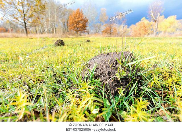 Clod of earth called molehill, caused by a mole