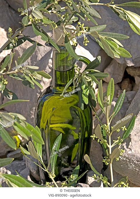 green bottle filled with olive oil on gray stones in branches of olivetrees. - 12/05/2008