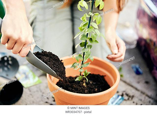 A person potting up a young plant in a terracotta pot and adding soil around the base with a trowel
