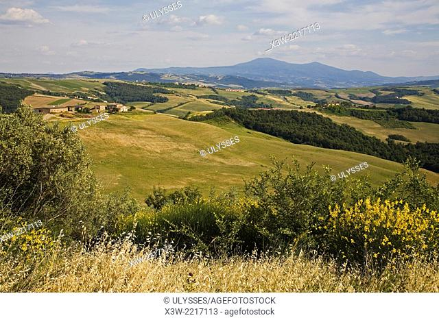 europe, italy, tuscany, crete senesi area, landescape in casale ranch area, view of amiata mountain