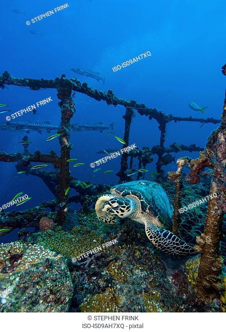 Resting turtle starts to flee