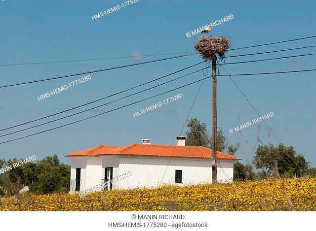 Portugal, Alentejo Region, Stork on the road between Mertola and Beja
