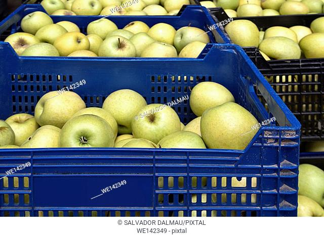 stock category boxes with golden apples,location figueres,girona,catalonia,spain europe,