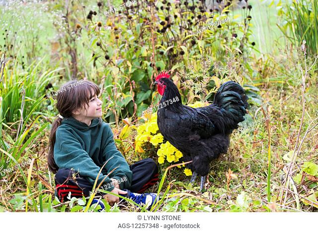 Young girl with black Australorp rooster in autumn garden; Higganum, Connecticut, United States of America