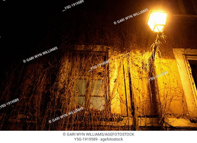 ivy growing on window on building at night in trastevere rome italy
