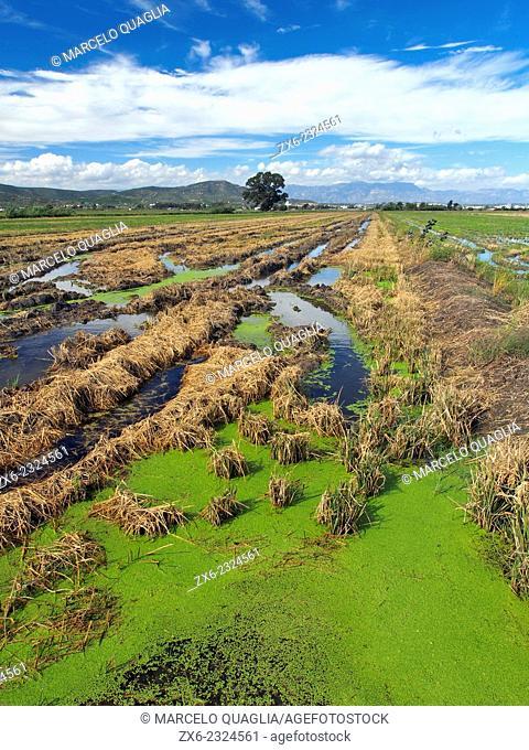Rice fields after harvest. Ebro River Delta Natural Park, Tarragona province, Catalonia, Spain