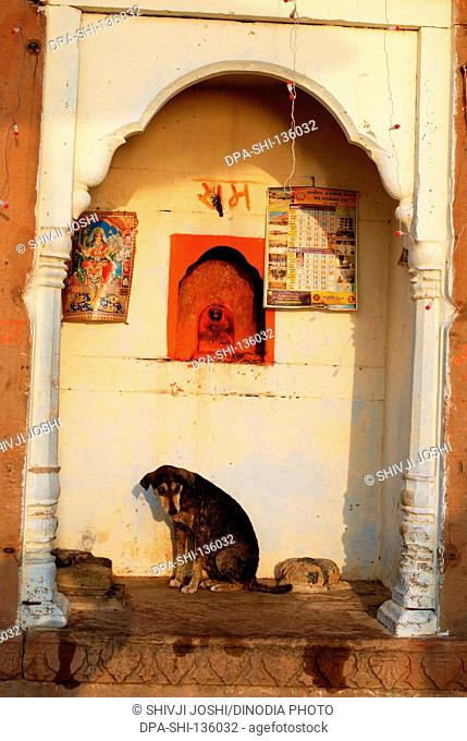 Dog resting under deity idol at Ghats ; Varanasi ; Uttar Pradesh ; India