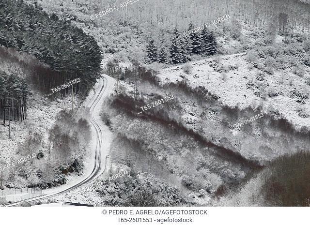 A trail crosses a forest on a snowy mountainside, Pedrafita Do Cebreiro, Lugo province, Galicia, Spain