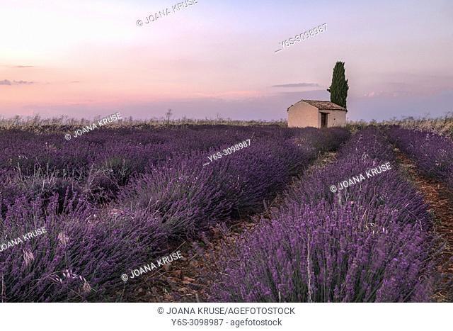 Valensole, Alpes-de-Haute-Provence, Provence, France, Europe