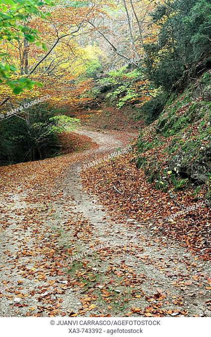 Road through Els Ports natural park at autumn , Tarragona province , Catalonia , Spain