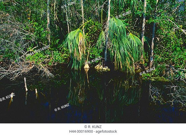 Palm tree, reflections, swamp area, water, Tamiami Trail, Everglades National Park, Florida, USA