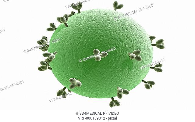 A rotation of the HIV virus which fades down to reveal the internal structure of the matrix