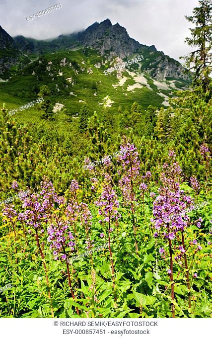 Vysoke Tatry High Tatras, Slovakia