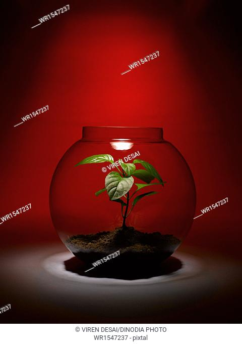 plant growing inside a glass bowl India