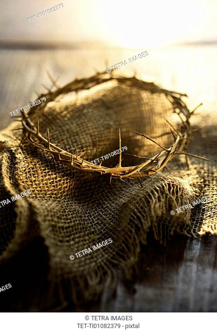 Close up of crown of thorns
