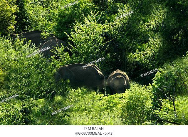 ELEPHANT HERD INSIDE CHINNAR WILDLIFE SANCTUARY