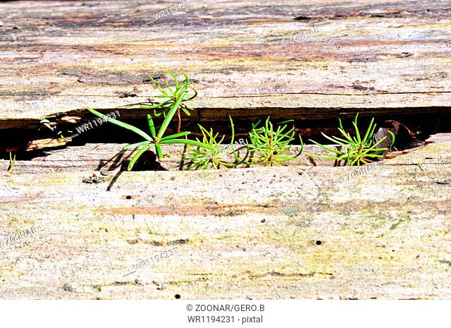 Seedlings, spruce and fir-tree in wood