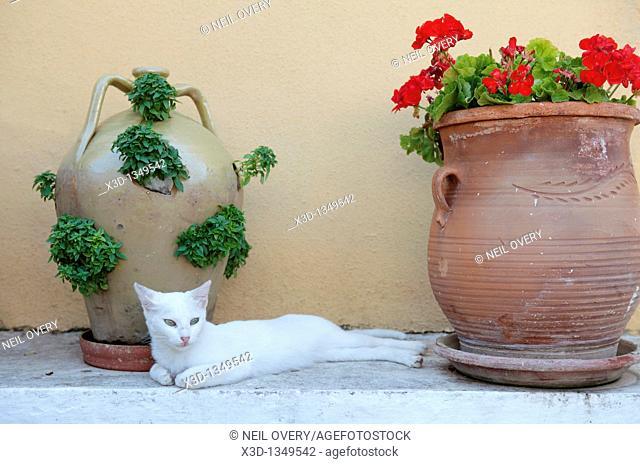 White Cat, Paleokastritsa, Corfu, Greece