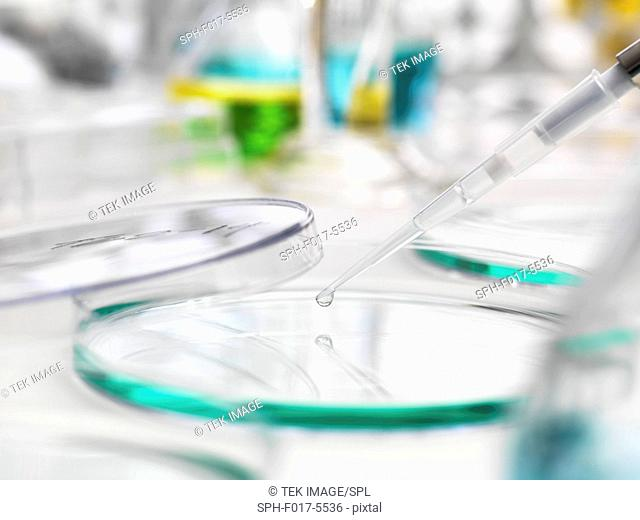 Sample being pipetted into a Petri dish