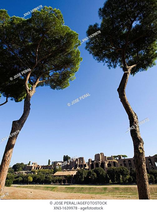 Pines, Circus Maximus on the Palatine Hill, Circo Massimo, Palatino, ancient Rome, Rome, Lazio, Italy