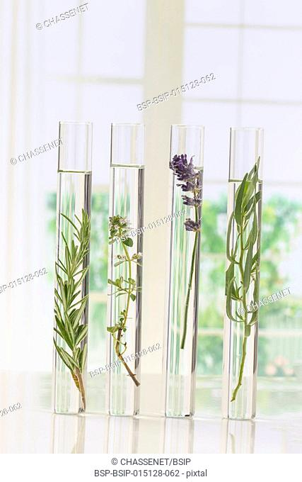 Plants in test tubes for scientific experiment