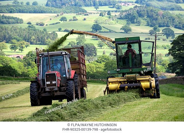Self-propelled forage harvester filling tractor trailer, harvesting grass to make silage for livestock feed, England, june