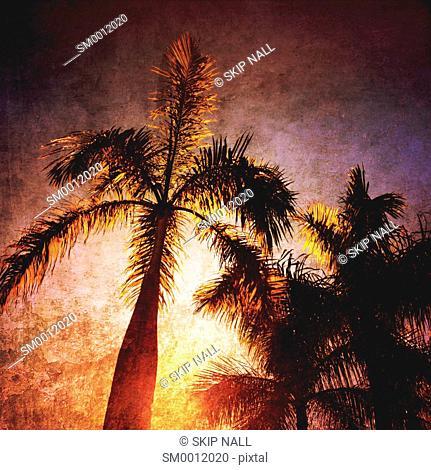Florida palm trees against a sunny sky