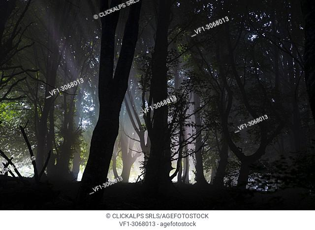 Rainbow through the fog in the woods, along the path to Monte San Primo, Bellagio, Province of Como, Lombardy, Italy