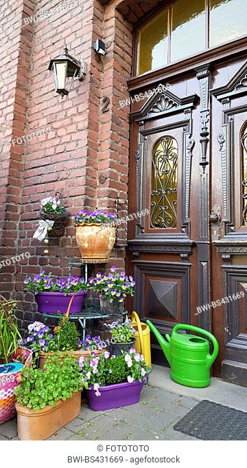 horned pansy, horned violet (Viola cornuta), floer pots in front of a front door, Germany