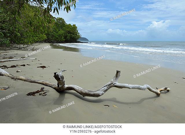 Driftwood on the Beach, Newell Beach, Newell, Queensland, Australia