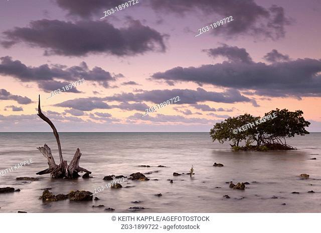 Mangrove trees and dawns first light, Big Pine Key, Florida, USA