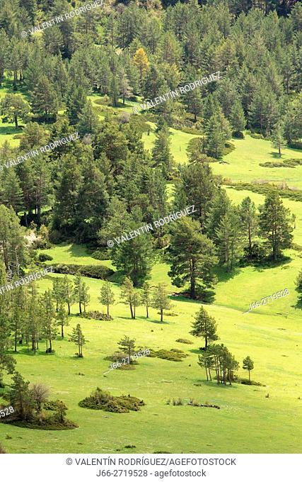 Meadows in the farm Valtablado. Sierra Albarracín. Teruel