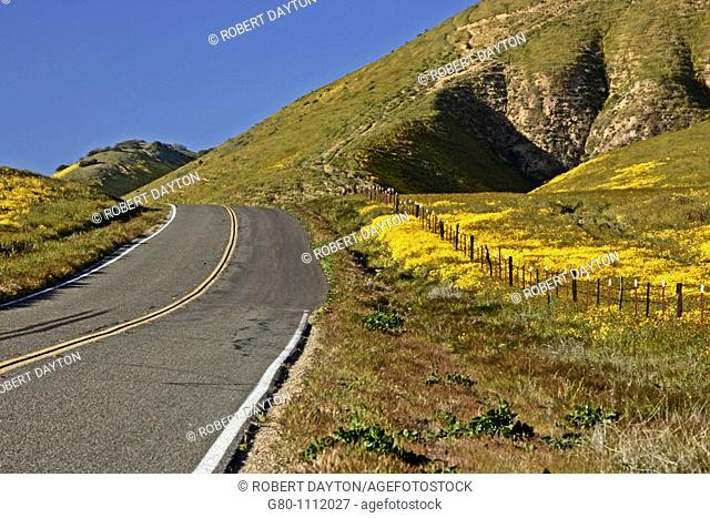 Wildflowers bloom along State Route 58 in Southern California