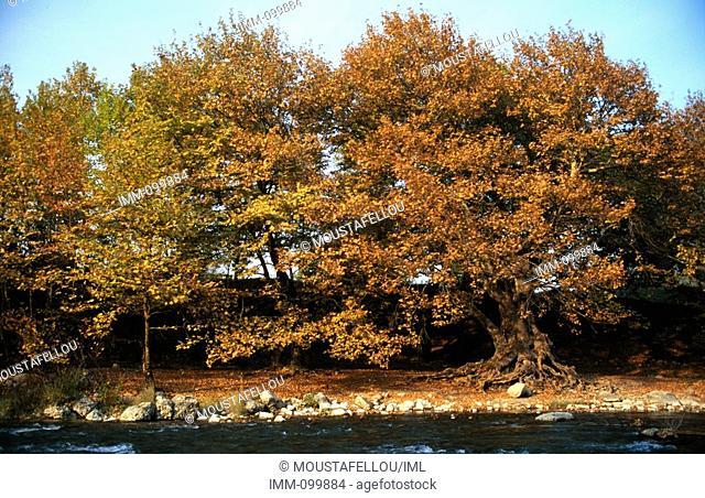 Epiros, Konitsa Aoos River Bank trees