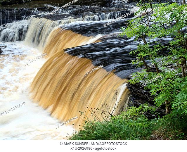 Peaty Water in Lower Aysgarth Falls on the River UreWensleydale Yorkshire Dales North Yorkshire England