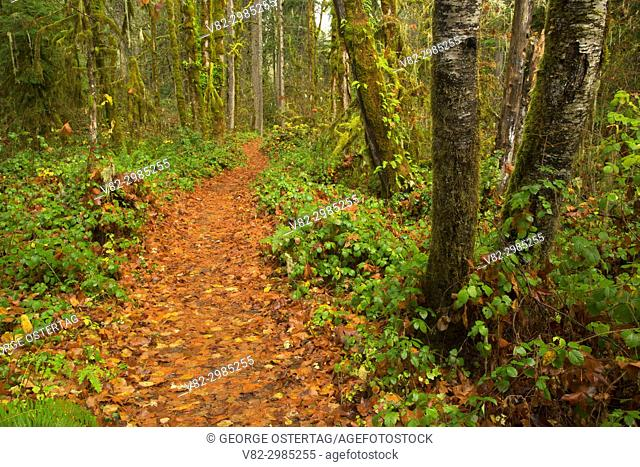 River Trail, Cascadia State Park, Oregon
