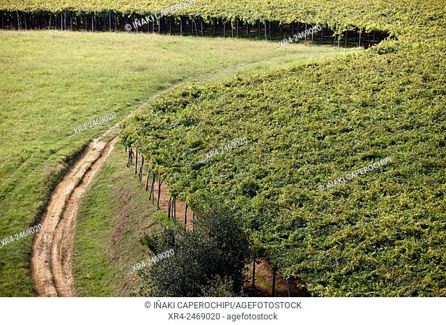 Spain, Basque Country, Guipuzcoa, Getaria, Txakoli vineyards