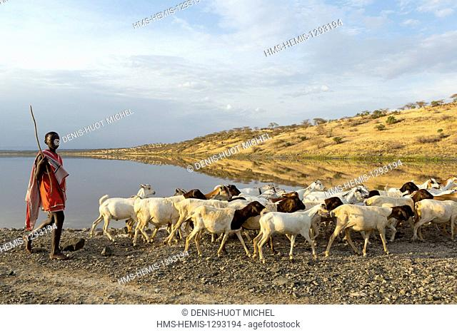 Kenya, lake Magadi, catlle with masai people