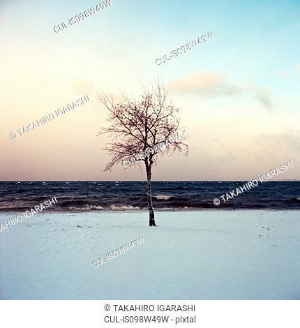 Tree, Lake Inawashiro, Fukushima, Japan
