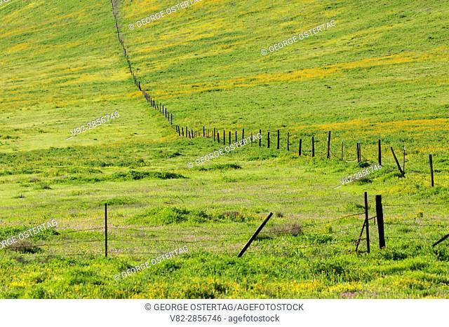 Ranch fence, Carrizo Plain National Monument, California