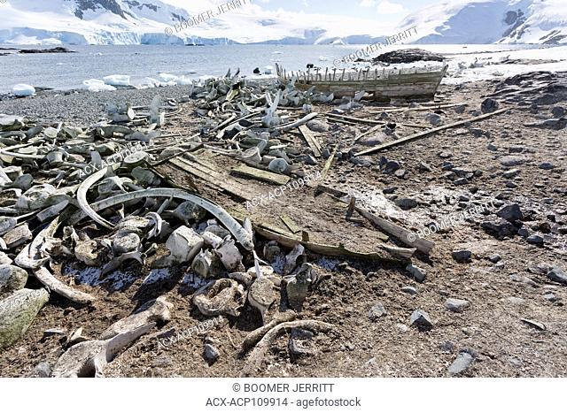 Whale bones and whale boats remind the visitor to Mikkelson Harbour of the history of the whaling industry in and around the Antarctic Peninsula