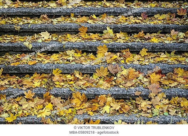 Natural Science, Stair in the old park in autumn