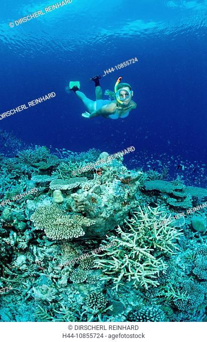 10855724, Maldives, Indian Ocean, Meemu Atoll, sno
