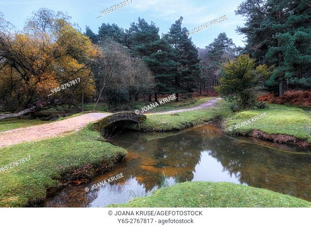 Splash Bridge, Holly Hatch Inclosure, New Forest, Hampshire, England, UK