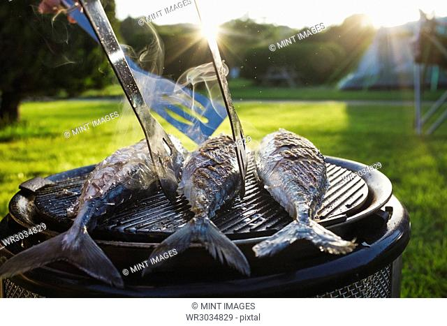 A small barbeque with three fresh mackerel fish on the grill, and a person using tongs to turn the fish